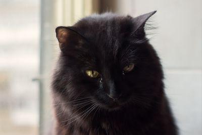 infección del ojo de gato hundida