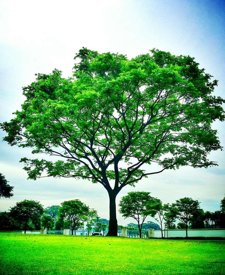 Plantas comunes for Tipos de arboles para plantar en casa