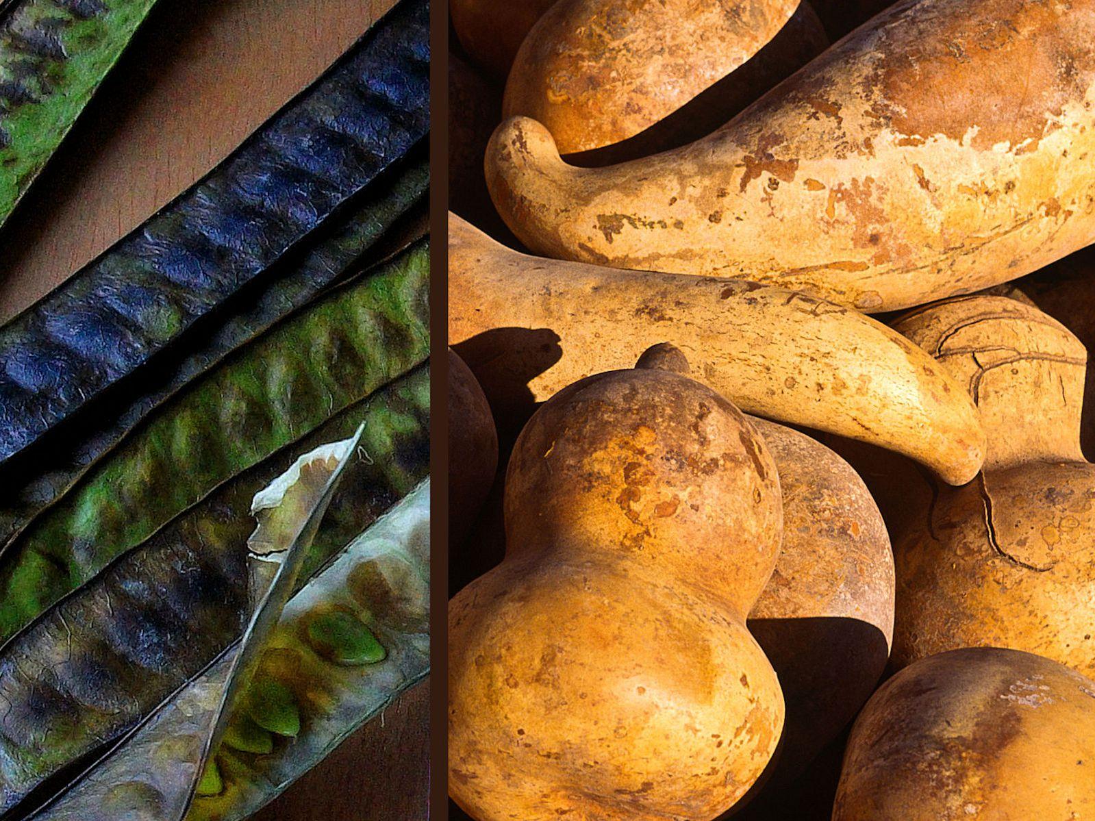 hierbas para adelgazar rapido en chile seco