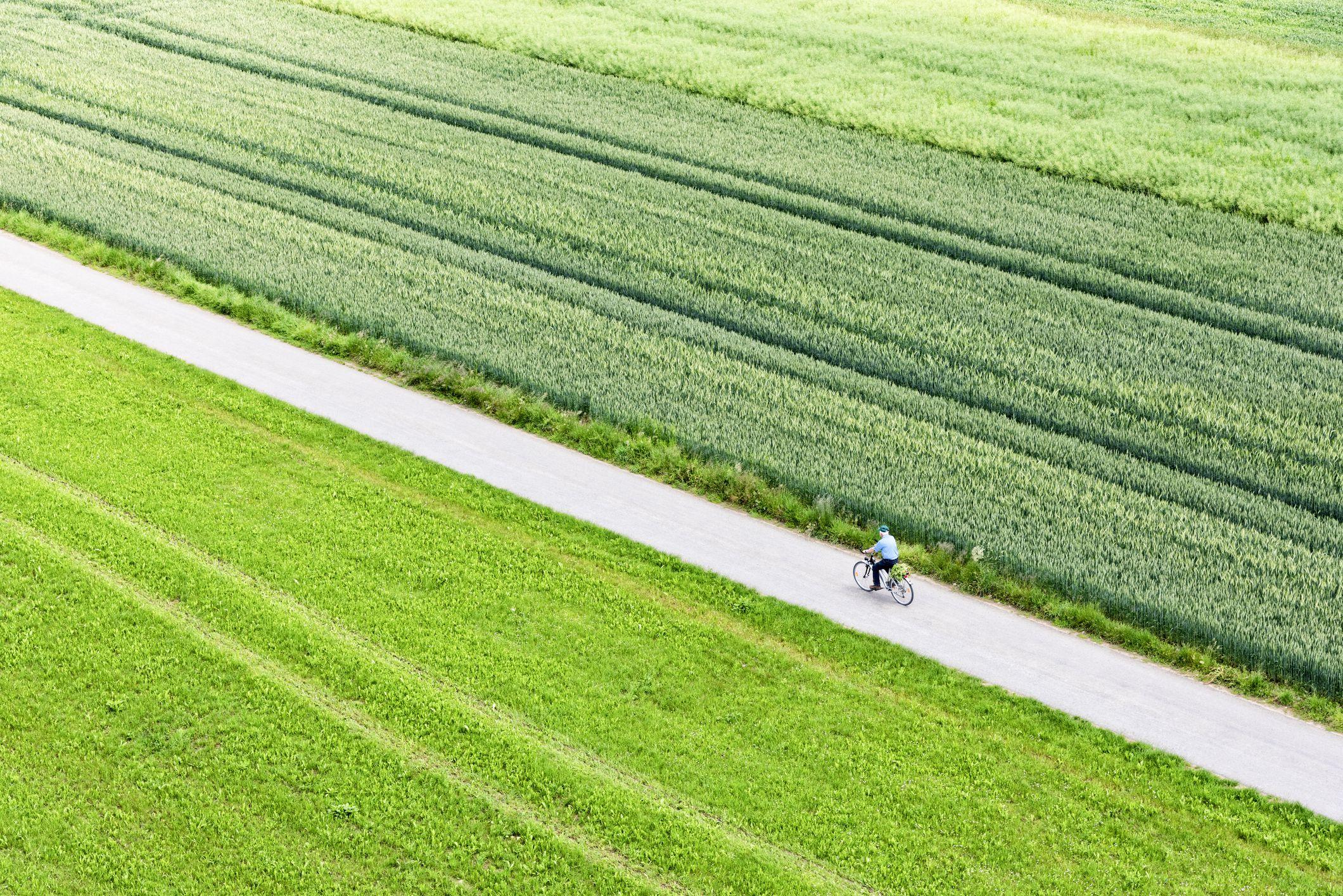Camino a través de una variedad de campos verdes