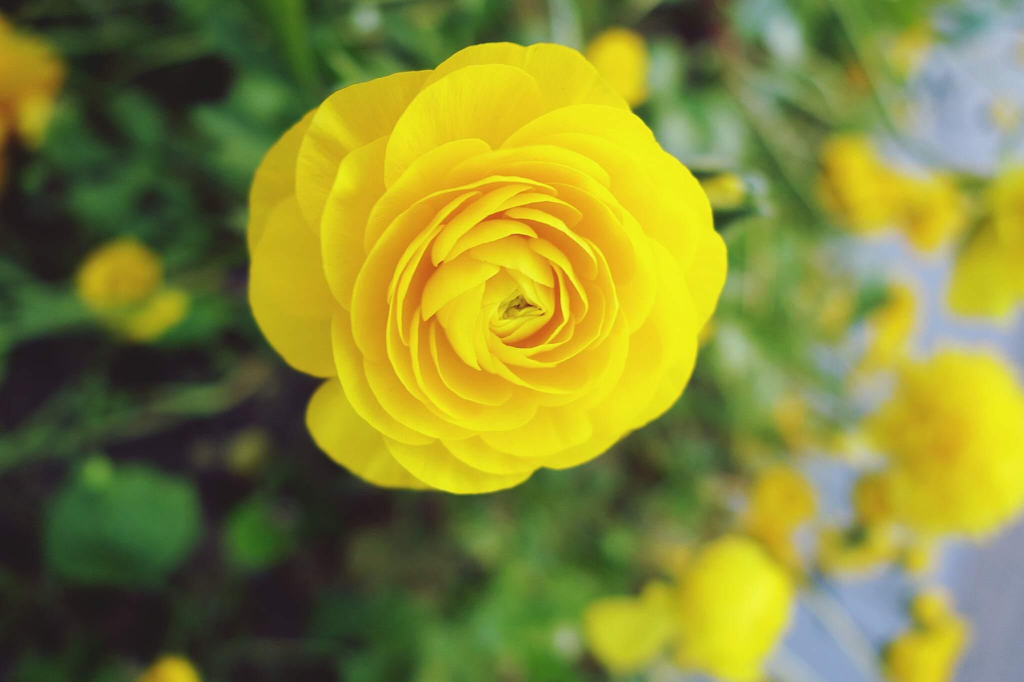 Plantas Con Flores Amarillas Para Tu Suerte