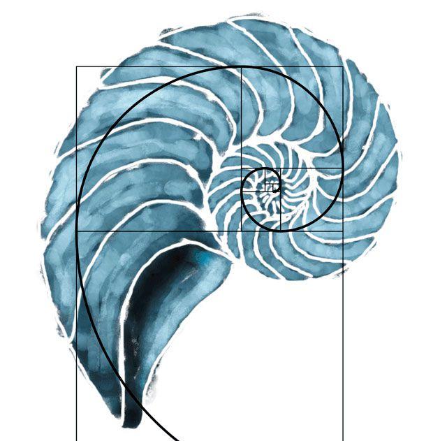Fibonacci - nautilus