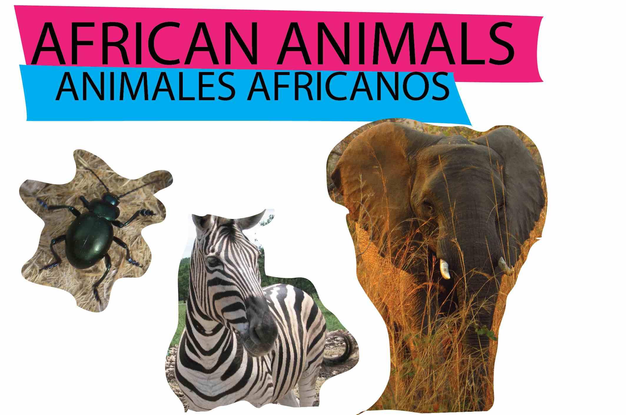 african-07.jpg
