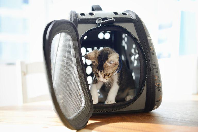Gato en maleta de transporte