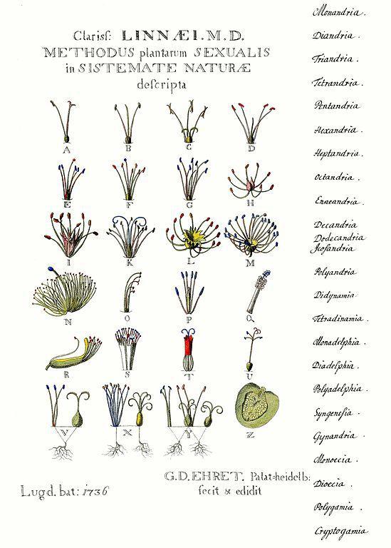 Grabado del siglo XVIII
