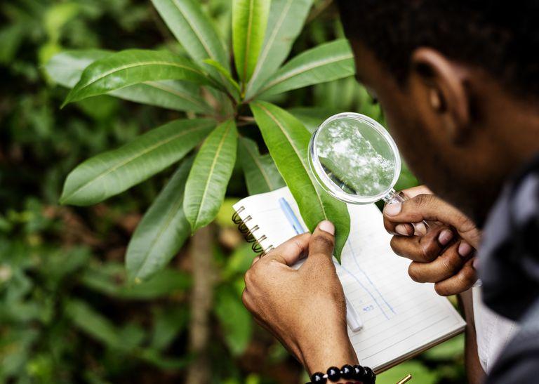 Kid describing plant