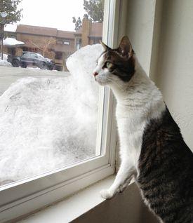 gato_realengo-frio.jpg