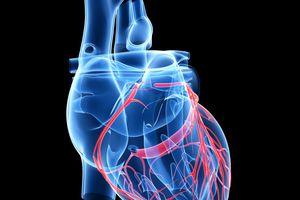 Capas del corazón: pericardio-endocardio-miocardio