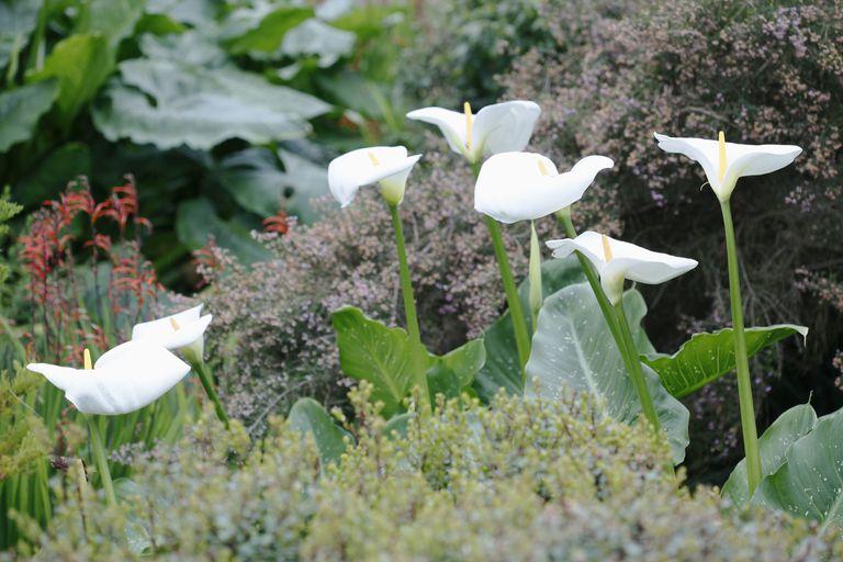 Plantas Con Flores Para Decorar Tu Casa - Como-decorar-un-jardin-con-plantas-y-flores