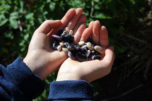 Manos sosteniendo semillas