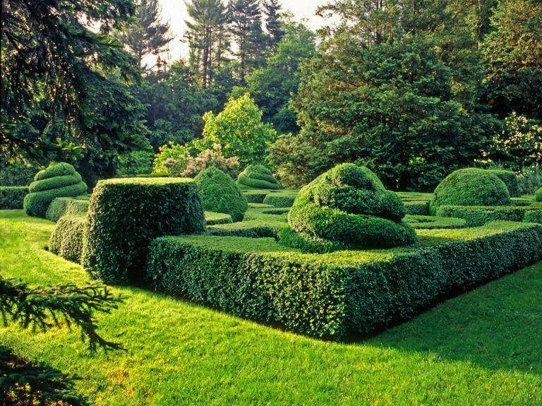 Poda tu jardín