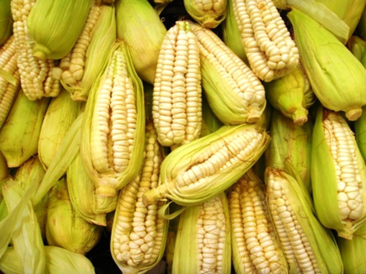 choclo (maíz tierno)