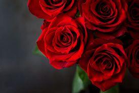 un ramo de rosas rojas
