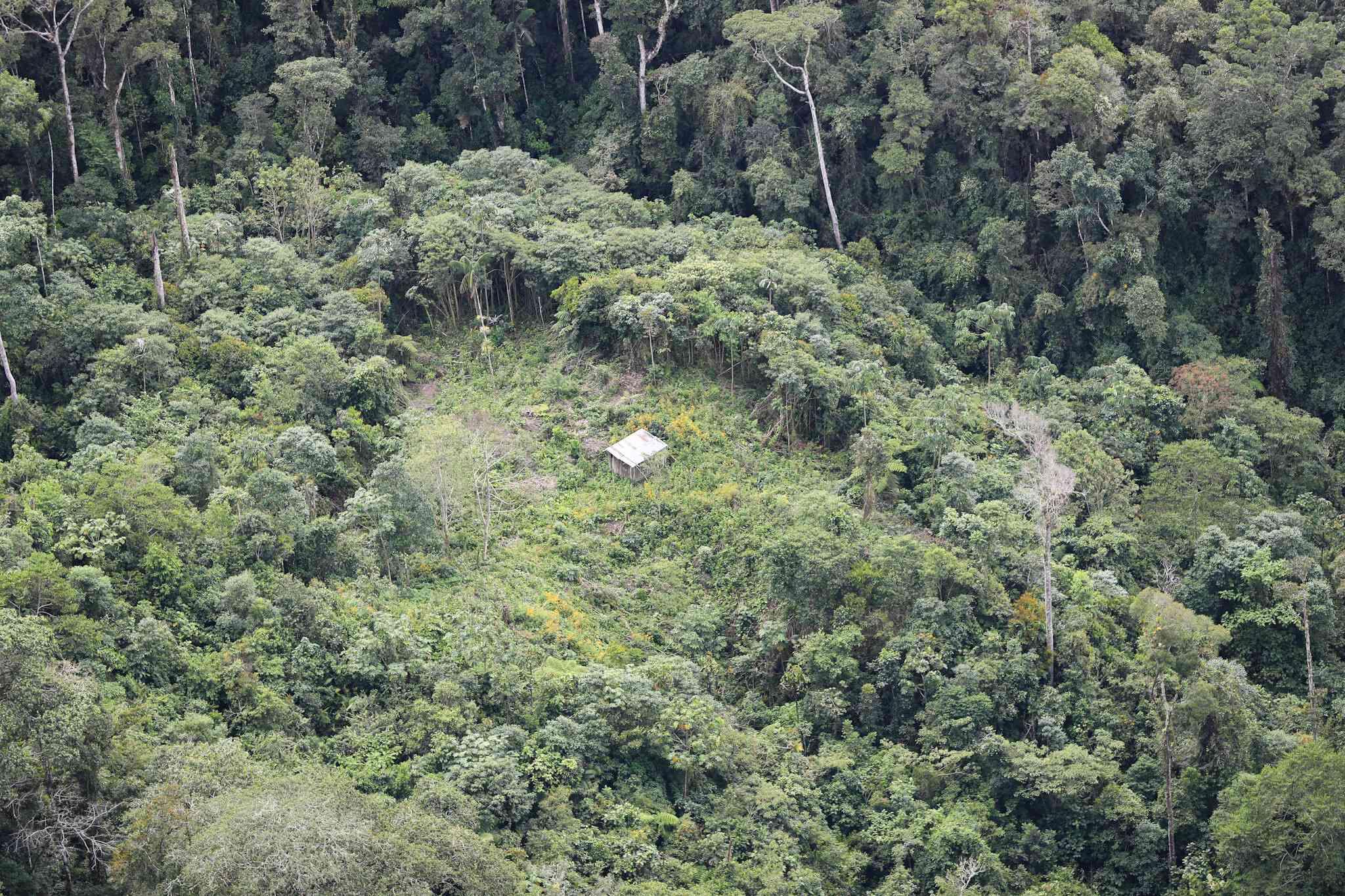 Bosque Altomayo