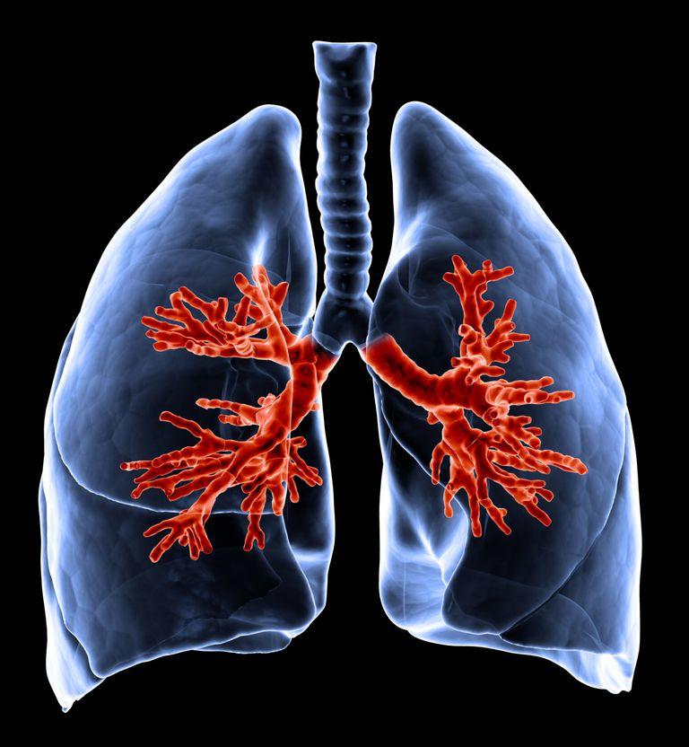 Cómo son los pulmones