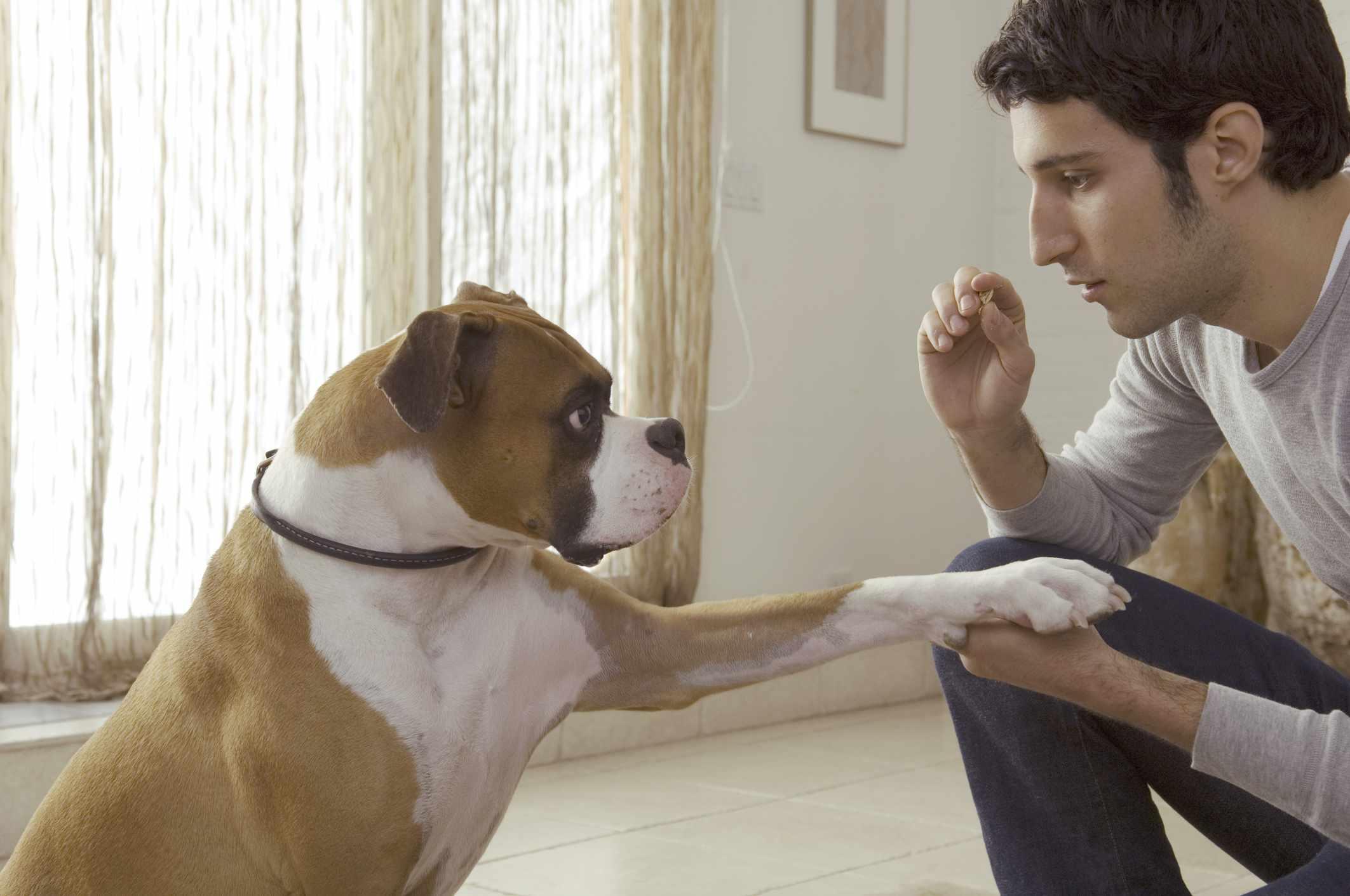 Un perro obediente