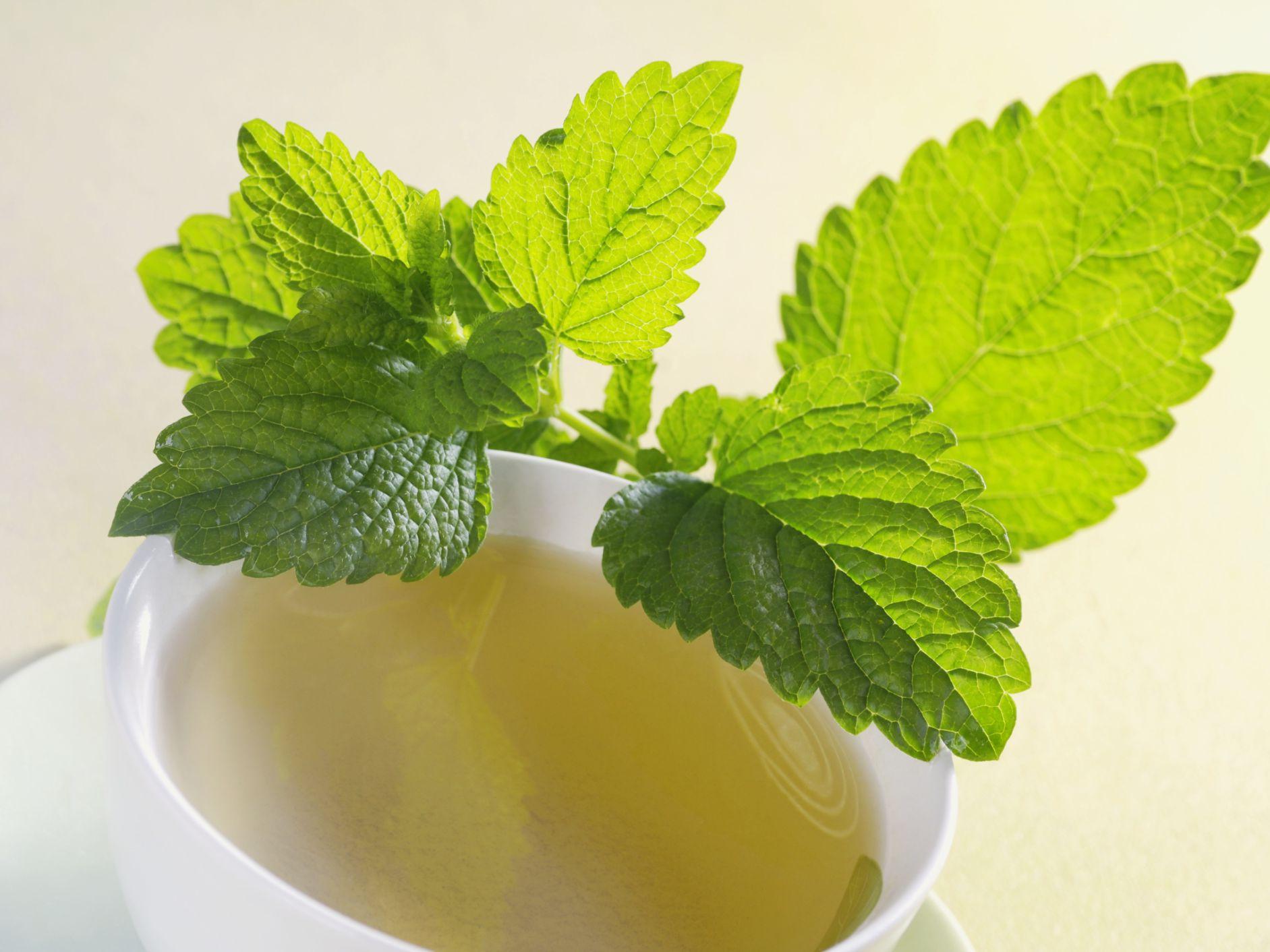 beneficios de la planta medicinal toronjil