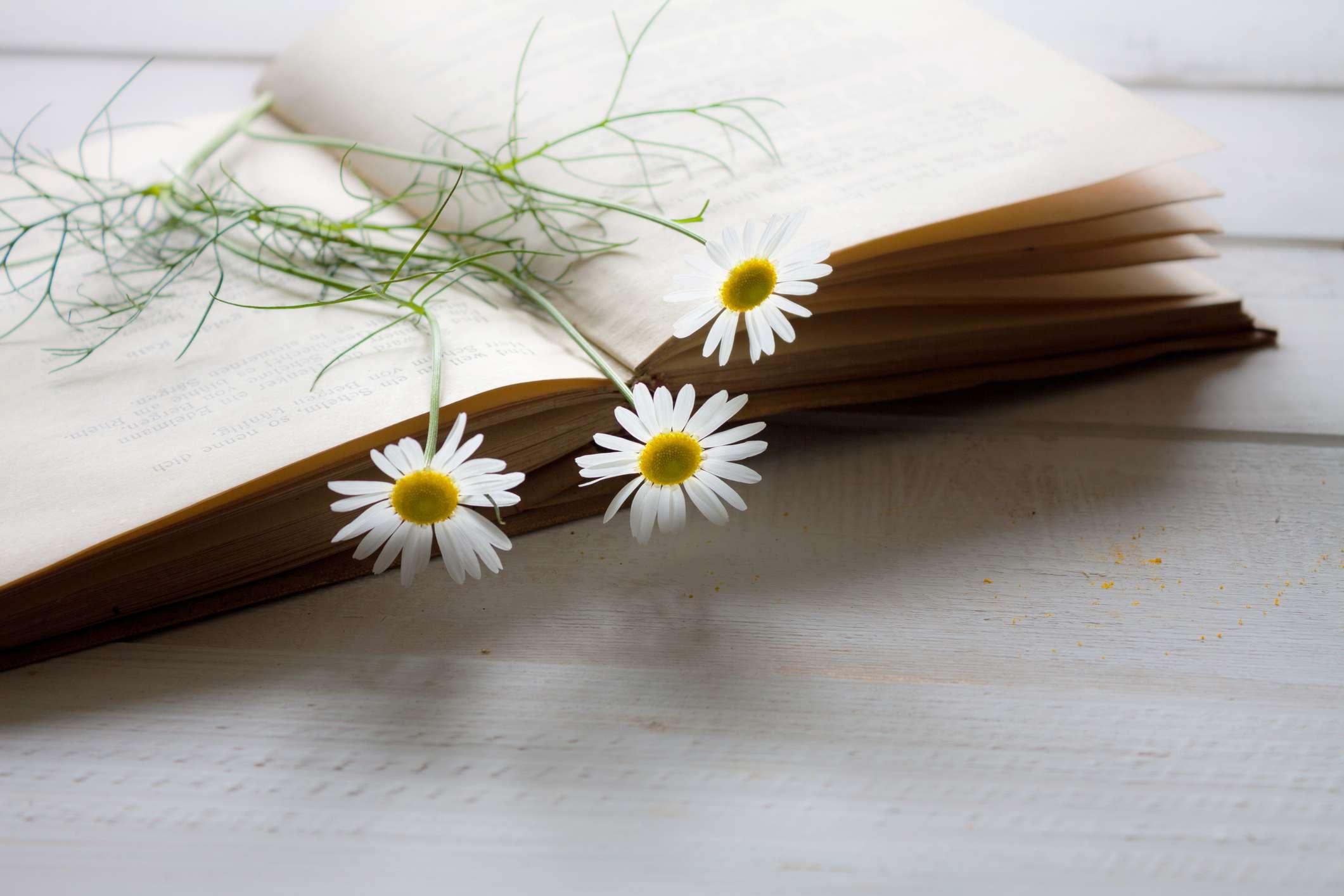Un libro vintage con tres flores pequeñas